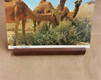 Post Card camels in the desert