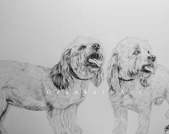 Pet drawing, sketch, special gift