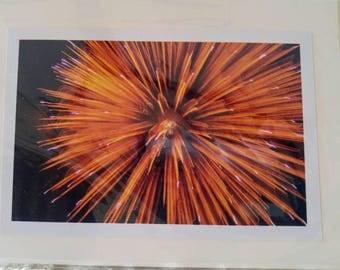 Blank card with firework -- 4 x 6.