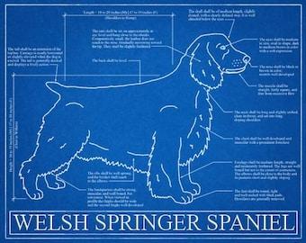 Welsh Springer Spaniel Blueprint Elevation / Welsh Springer Spaniel Art / Welsh Springer Spaniel Wall Art / Spaniel Gift / Spaniel Print