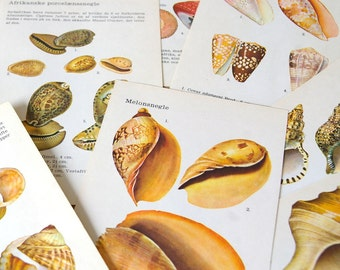 Vintage shell illustrations original.Book pages shells.Color illustrations.Prints.Collage pages.Colorful shells.Wall decor.Paper supply.C