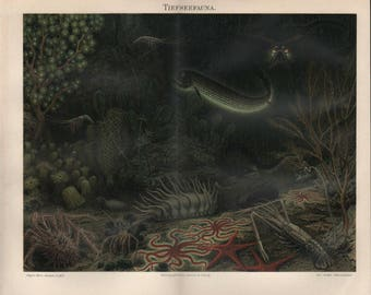 Chromolithograph deep-sea fauna
