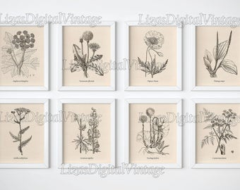 Set of 8 prints, Botanical prints, Wall art print set, Wall art set, Set of vintage botanical prints, Printable set, Illustration set, JPG