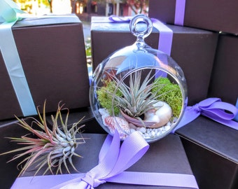 Deluxe Air Plant Terrarium Kit / DIY Hanging Glass Tillandsia Terrarium Kit