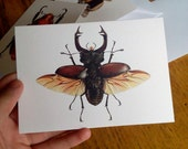 Stag Beetle - Greetings Card (Lucanus cervus)