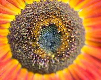 Sunflower Series 4/4 - Horizontal