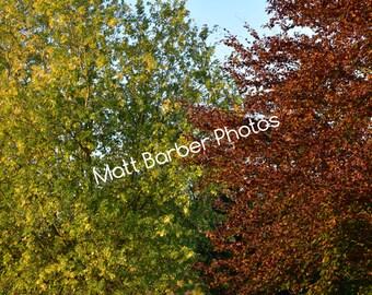 Wrap Around Autumn Trees Canvas (Large)
