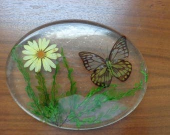 Vintage Lucite, Dried Daisy and Butterfly Acrylic Trivet, Table Decor, Kitchen Decor