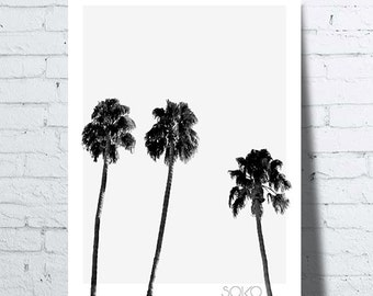 Displays in black and white, Palm trees, palms, Scandinavian californian, decoration