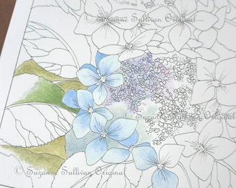 hydrangea coloring page flower coloring page lace cap hydrangea 240 art