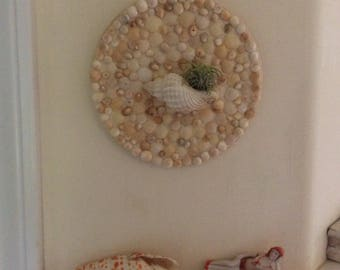 Air Plant Wall Hanging, Shells from Beach on Kauai, One Air Plant Included, Handmade