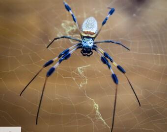 Spider Photo, Spider Photography, Nature Photography, Spider Print, Blue Spider,wall art, Spider Web, Spider Web Photo
