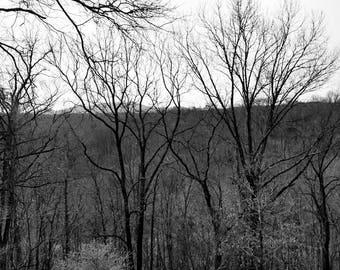 Black and White Treeline Photo