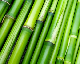 BAMBOO OIL Extracted from Bamboo, Bamboo Oil Infusion, Bamboo Oil Extract, Pure Bamboo Extract, Infused Bamboo Extract, Bamboo Massage Oil.