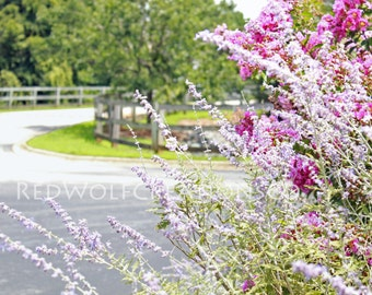 Purple Flowering Bushes INSTANT DOWNLOAD Digital download picture