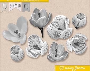 CU Spring Flowers Crocus