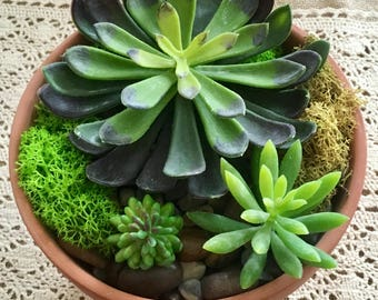 large terra cotta arrangement/large succulent planter/large terra cotta planter