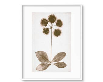 Gallery Wall, Sepia Prints, Modern Botanicals, Wildflower Print, Printable Art, Art Prints, Wall Art, Wall Prints, Large Wall Art Files