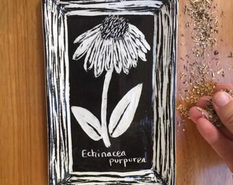 Echinacea herb plate