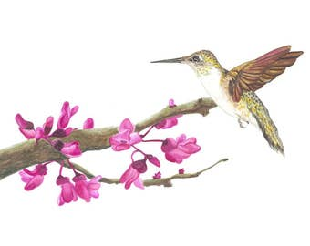 """Hummingbird Watercolor Painting """"How Sweet It Is"""" , All Proceeds donated to Cancer Research"""