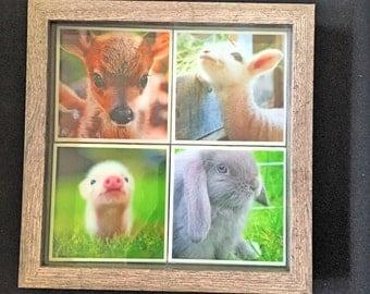 Baby Animal Wall Art