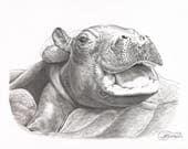 Print of Fiona the Hippo from the Cincinnati Zoo