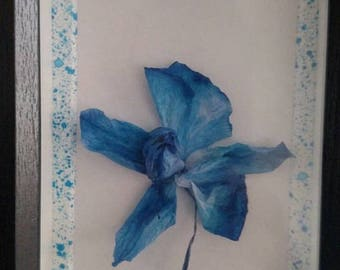 True Beauties - Beautiful Real Preserved Dried Orchid Flower Art
