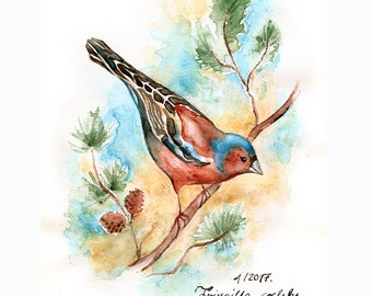 Nature Book Chaffinch Original Watercolor and Gouache Painting