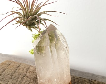 Gold Dipped Quartz Crystal Point with air plant  Airplant, Tillandsia, teen gift, shower gift,  Boho , gift, holiday, best friend birthday
