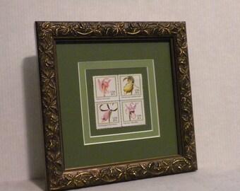 Orchids, Framed stamps, Framed flower print, framed art