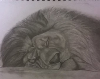 Sleeping Lion A4 drawing Print