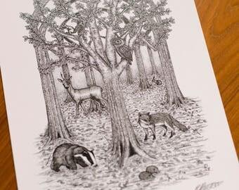 A4 Woodland Illustration Print.