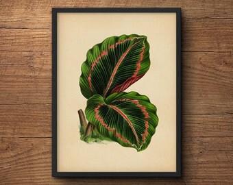 Botanical Wall Art, Tropical Leaf Print, Tropical Decor Print, Tropical Art Decor, Tropical Leaves Art, Tropical Artwork, Tropical Art Print
