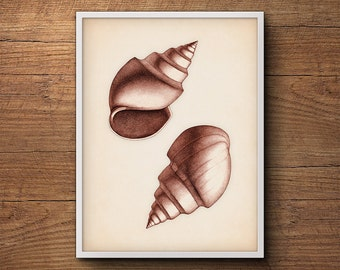 Seashell Print – Coastal Art, Scientific Illustration, Nautical Prints, Beach Art, Vintage Art