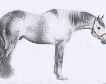 "Quarter horse Stallion ""Truly Priceless"""