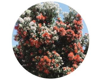 Spring Flowers Tree, Red Flowers, Circle of Flowers, Rounded Frame, Visual Poetry, Fine Art Print, Minimalist Photography