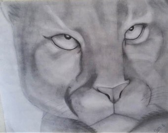 Cougar Pencil Drawing PRINT