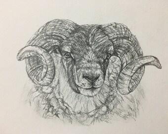 Custom pet portrait drawing in pencil A4 8x11