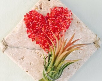 Air plant wall hanging: Red Heart