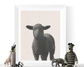Sheep Prints | Black Sheep Photograph Printable | Animal Printables | Black and White Photo | Farmyard Animal | Farm Animals