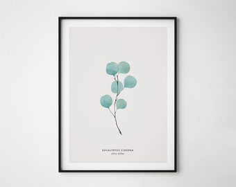 Eucalyptus leaf print, Eucalyptus poster, Leaf print, Silver Dollar, Eucalyptus Cinerea, Printable Poster, Botanical Poster, Nature art