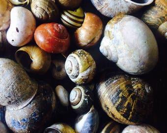 10 Snail Shells