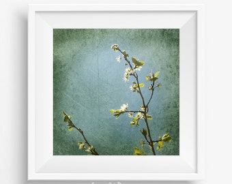Spring flower photography - nature photography - spring flowers - flower wall art - blossom photography - cherry blossom - spring blossoms