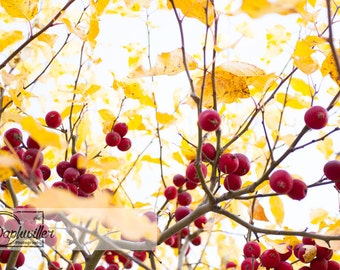Yellow Berry Tree