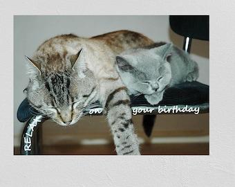 Birthday Printable Card, Cats, Happy Birthday Print, Digital Print, JPG