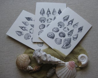 6 Handmade Seashells blank notecard set
