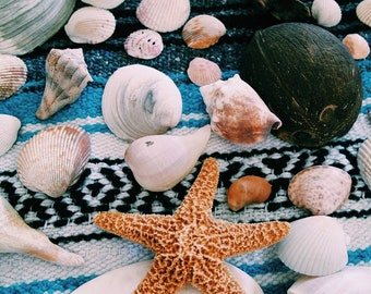 Bulk Seashells, assortment of sea shells,craft Seashells,Beach in a box