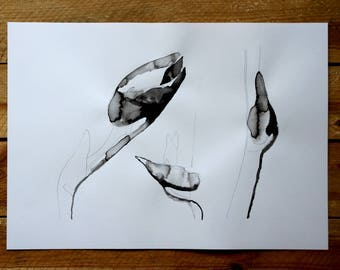 "Original drawing ""Homage to Blossfeldt I"" / nature / ink / pencil"