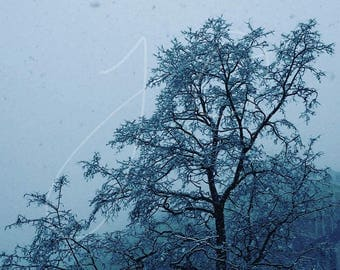 Chicago Snowfall