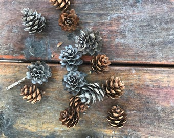 Alaskan pinecones